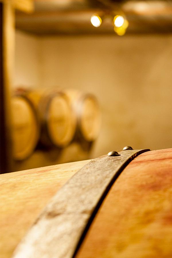 Vini-viticole