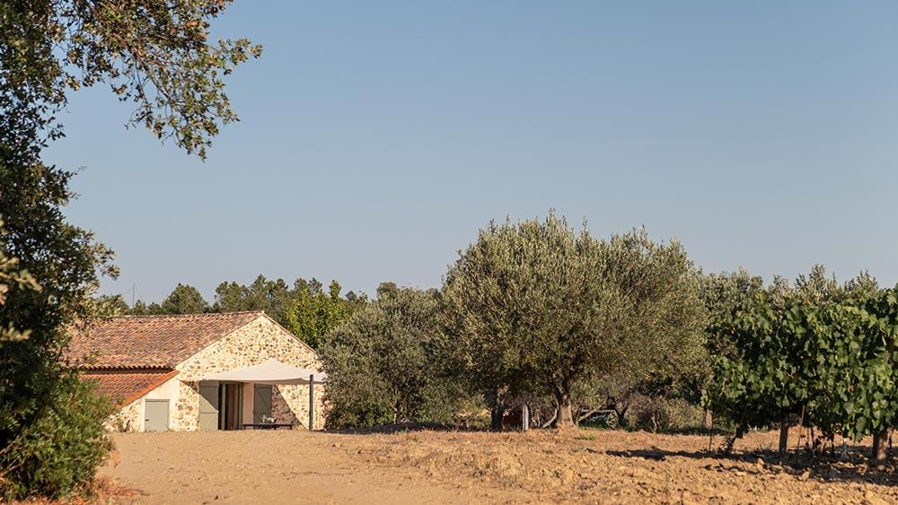 rénovation viticole